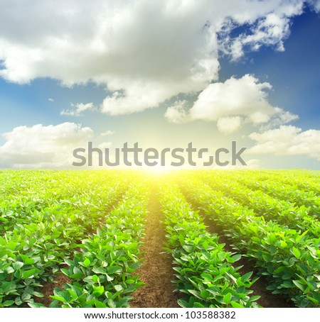 Green rows on field and sunshine. Fresh spring composition - stock photo