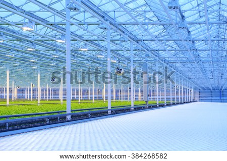 Green salad growing in greenhouse, equipment and lighting - stock photo