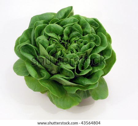 green salad-head - stock photo