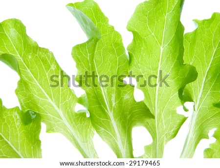 Green salads leaves on a white background.