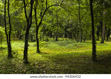 green scene in young forest - stock photo