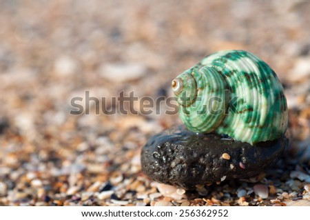 Green sea shell on the beach - stock photo
