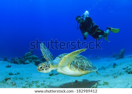 Green Sea Turtle and Scuba Diver - stock photo