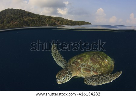 Green Sea Turtle and Similan Island, Thailand - stock photo