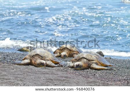 green sea turtles (Big Island Hawaii) - stock photo