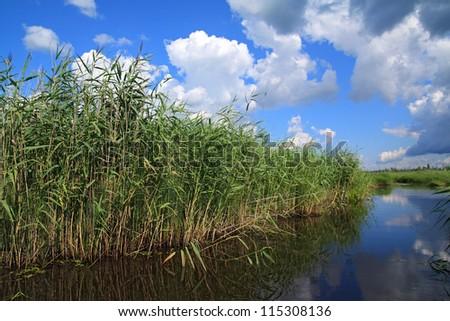 green sedge on big lake - stock photo