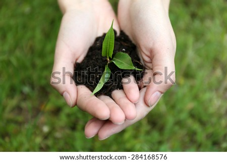 Green seedling growing from soil in hands outdoors - stock photo