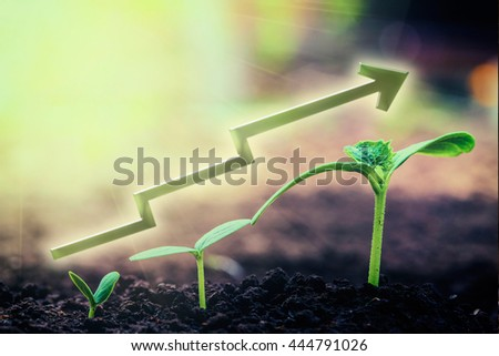 Green seedling growing on the ground in the rain. For business - stock photo