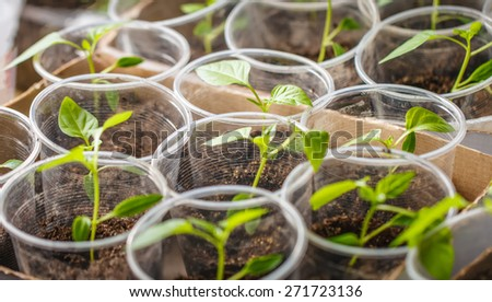 Green seedling growing out of the soil - stock photo
