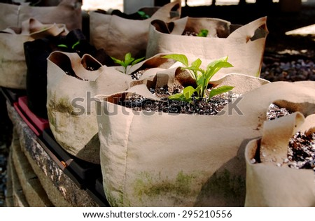 Green Seedling in a Grow Bag