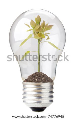 Green seedling in a light bulb isolated on a white background. - stock photo