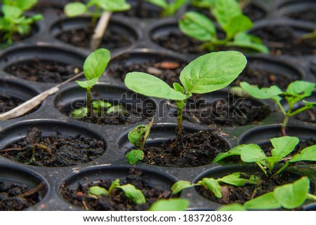 Green seedling on tray