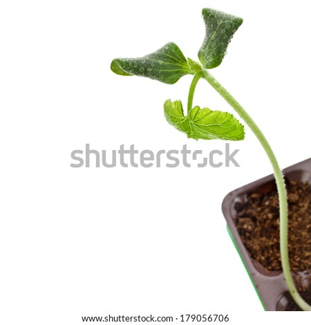 Green Seedling sprout in the flower pot, isolated on a white background - stock photo