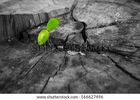 Green Seedlings on a tree stump - stock photo