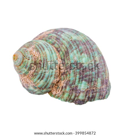 Green shell isolated on a white background