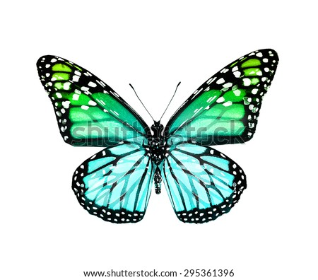 Green shiny butterfly , isolated on white - stock photo
