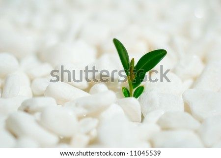 Green shoot on white pebbles background