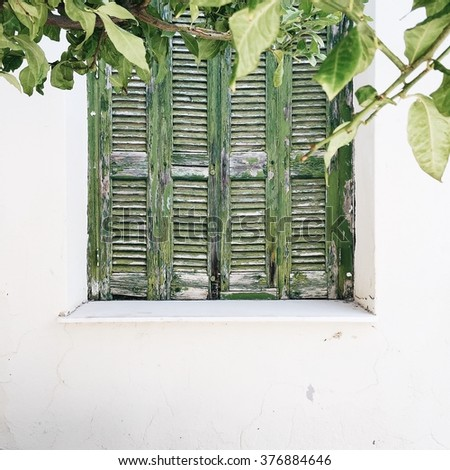 Green shutter with leaves - stock photo
