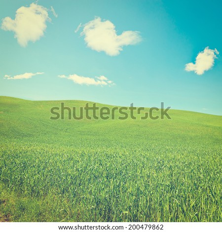 Green Sloping Meadows of Tuscany, Instagram Effect - stock photo