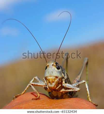 Green smiling grasshopper against the blue sky - stock photo