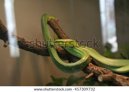 green snake in terrarium zoo