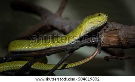 Green snake live in showcase in zoo , Thailand