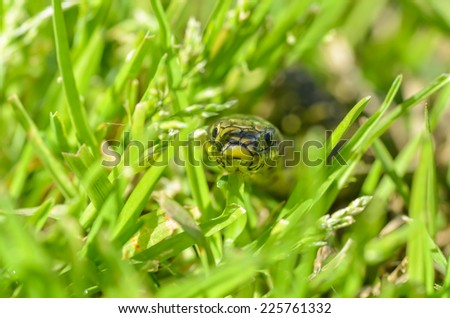 Green Snake looking with attention. Macro photography. - stock photo
