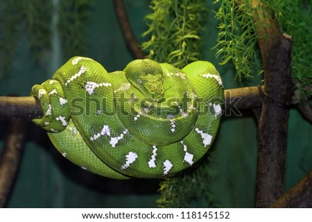 Green snake on a branch - stock photo
