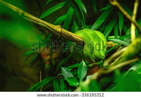 Green snake on a tree branch in a dark terrarium with blurred background and leaves, artistic dark green toning with copy space for text