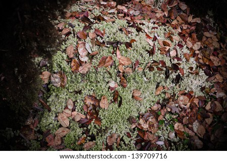 Green Sphagnum Moss with Red Leaves - stock photo