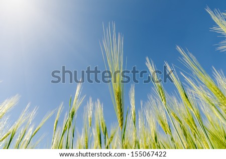 green spica and sun over it. soft focus on center - stock photo