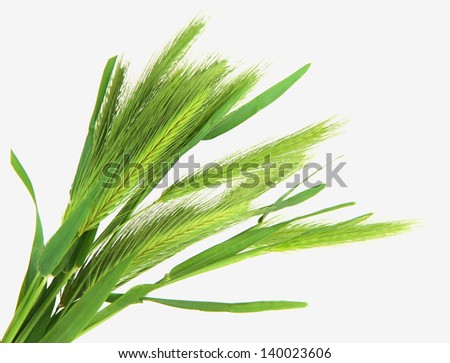 Green spikelets, isolated on white