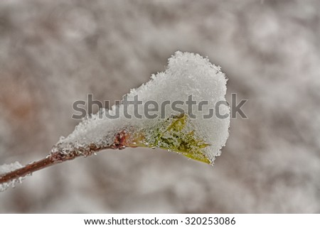 Green spring bud covered in snow.  - stock photo