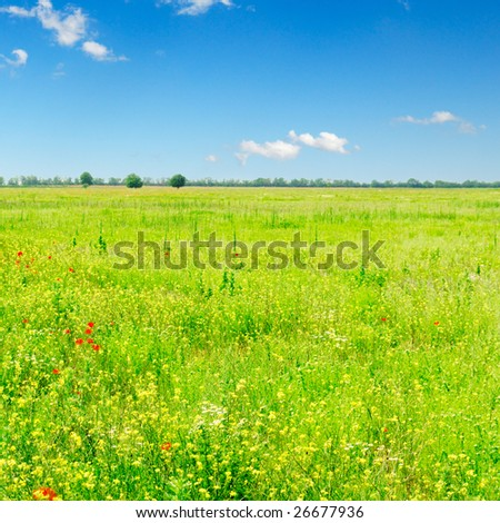 green spring field and beautiful white fluffy clouds