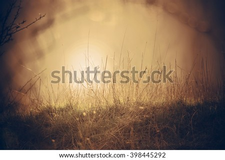 Green spring grass illuminated by the sun. Interesting shot behind the grid. Vintage sepia effect. Nature background for design - stock photo
