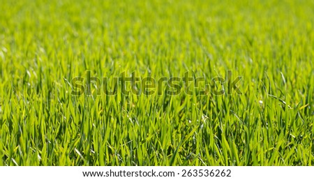 Green spring grass in foreground, blurred background - stock photo