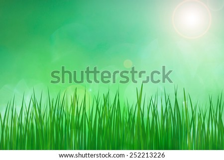 Green spring grass with sun light in the background, illustration. - stock photo