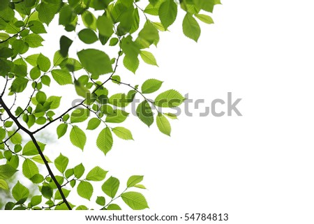 Green spring leaves isolated on white background - stock photo