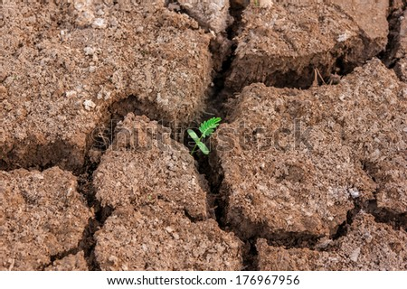 green sprout from dead soil