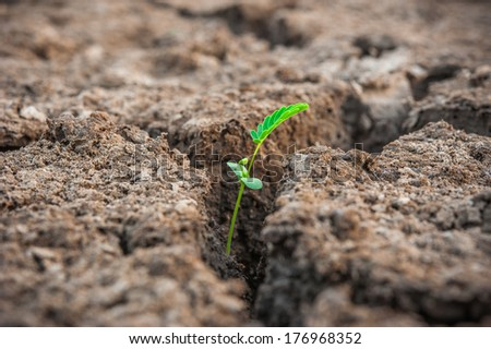green sprout from dead soil - stock photo