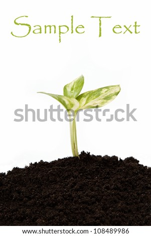 Green sprout from the earth on a white background. - stock photo
