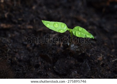 Green sprout growing from ground. Dewy young leaves sprouting plants - stock photo