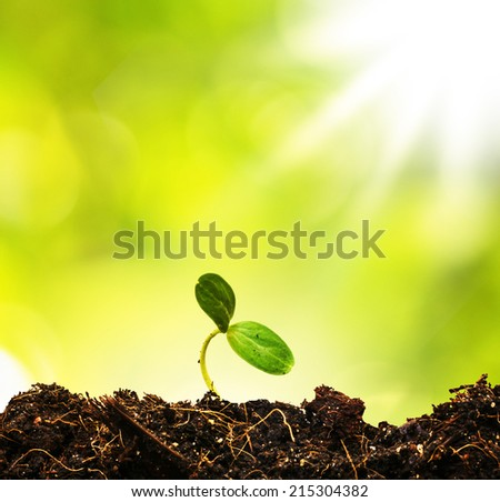 Green sprout growing from ground, new or start or beginning con - stock photo