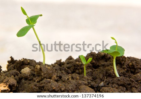 Green sprout growing from seed in organic soil - stock photo