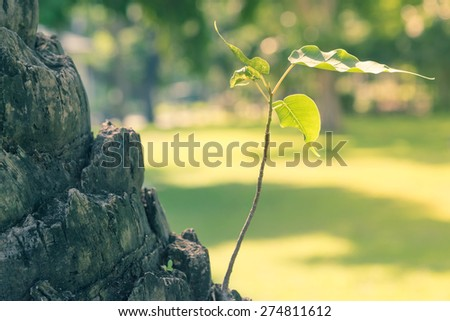 Green sprout growing from seed - Vintage picture style - stock photo