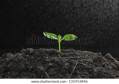 Green sprout growing from seed with steam on soil fertility - stock photo