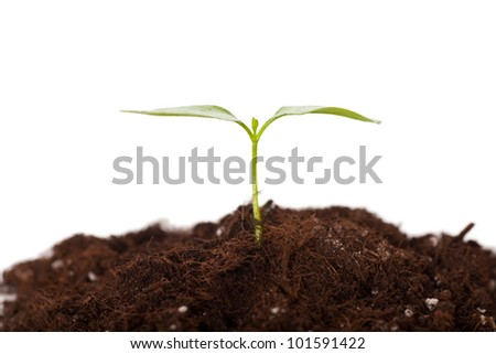 Green sprout growing from soil isolated over white background