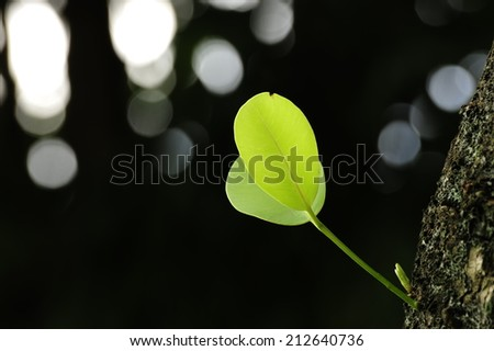 Green sprout growing from tree, new or start or beginning concept - stock photo