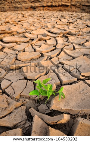 Green Sprout growing in dried land - stock photo