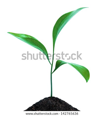 Green sprout growing isolated - stock photo